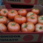 Pomidor szklarniowy Torero F1 - zbiór 14.03.2014 – średnia masa owocu 250-300 g