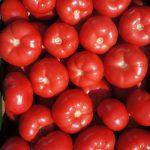 Pomidory malinowe Tomimaru Muchoo gotowe do sprzedaży (gospodarstwo Damiana i Pawła Chrzanów w Głuchowie, zdjęcie z 08. 04. 2014 r.)