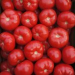 Pomidory malinowe Tomimaru Muchoo (gospodarstwo Damiana i Pawła Chrzanow w Gluchowie, zdjęcie z 08. 04. 2014 r.)