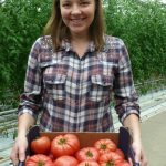 Alicja Rychter prezentuje pomidory malinowe odmiany Tomimaru Muchoo F1
