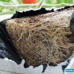podłoże kokosowe Forteco Basic