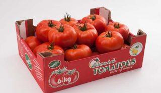 pomidor Altadena F1