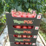 Pomidor malinowy Tomimaru Muchoo F1