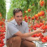 Pomidor Gourmandia F1
