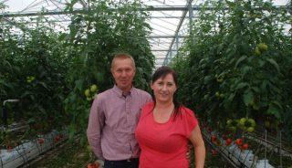 Piotr Lis - producent pomidorów