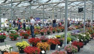 Żywy katalog odmian roślin balkonowo-rabatowych, bylin, trwa i ziół cieszył się dużym zainteresowaniem zwiedzających, Plantpol Zaborze