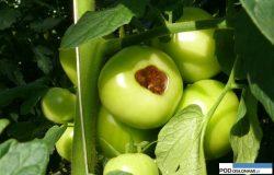 Niedobory składników pokarmowych wuprawach warzyw