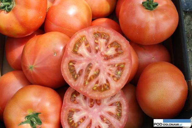 Pomidory Malinowe Do Tuneli Przegląd Odmian Na 2016 R Uprawa
