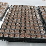 Kokosowe paper-poty Grow Concept, Plantpol