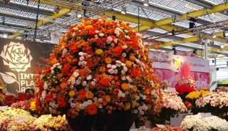 róże ze stoiska Interplant Roses_ targi IFTF 2015