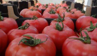 pomidory dobre z natury
