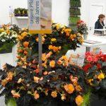 Stoisko firmy Rieger na IPM Essen 2015_begonie