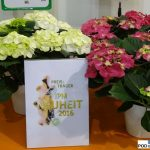 Hydrangea macrophylla Caipirinha_Frisbee Hot Pink_IPM Essen 2016