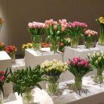 Wystawa Tulipanów w Wilanowie 2015