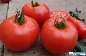 pomidor Zadurella F1