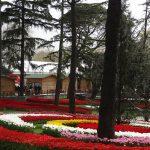 park Emirgan_Stambul_Istanbul Tulip Festival 2016