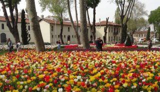 Gulhane Park_Stambul 2016_Istanbul Tulip Festival