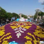 Sultanahmet_Stambul_dywan z tulipanow_Istanbul Tulip Festival 2016