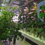 System PlantyFood - firma Certhon zademonstrowala, że możliwa jest uprawa bez dostępu światła dziennego