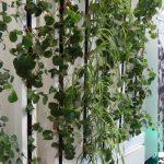 ZipGrow - wertykalny system uprawy hydroponicznej