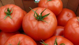 Ducovery, DeRuiiter, Monsanto