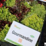 Sałata Gourmandine