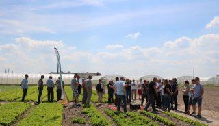 Uczestnicy spotkania podczas zwiedzania kolekcji sałaty firmy Hazera