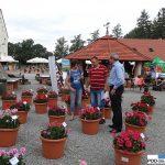 Dni Otwarte Florensis_Wojslawice 2016_strefa pelargonia