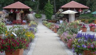 Dni Otwarte Florensis_Arboretum Wojslawice 2016