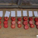 Podczas Dni Otwartych w stacji hodowlanej firmy Yuksel można było ocenić również wewnętrzną jakość owoców prezentowanych odmian pomidora