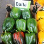 Balta' i 'Limone'