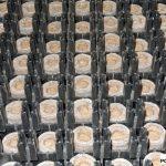 Pęczniejące koreczki do produkcji sadzonek z oferty firmy Jiffy