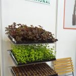 Koreczki do ukorzeniania roślin z firmy Ceres International