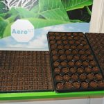 AeroNT - nowe podłoże do ukorzeniania sadzonek