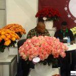kenia_mzurrieFlowers_roze jumilia-na-1-planie_FlowerExpo Poland Warszawa 2016