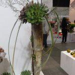 Jedna z kompozycji wykonanych z użyciem rozet eszewerii (stoisko firmy Amigo Plant)_FlowerExpo Poland Warszawa 2016