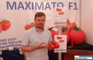 pomidor Maximato F1