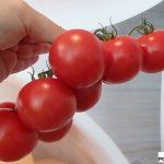 pomidor Trimoso RZ F1