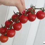 pomidor Genery RZ F1