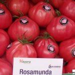 pomidor Rosmunda F1