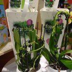 yourchid_diy-concept_ter-laak-orchids_FloraHolland Trade Fair Aalsmeer 2016