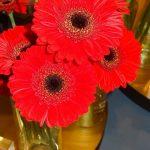 Gerbera 'Nirvana' - mini (Florist)