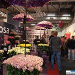 ekspozycja firmy QualiRosa_FloraHolland Trade Fair Aalsmeer 2016