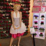 cyklameny z grupy Super Serie Petticoat_FloraHolland Trade Fair Aalsmeer 2016