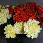 Gożdziki polskie (kremowe) i z importu_na_8 marca 2017_Kwiaciarnia Floristica Krakow__AC