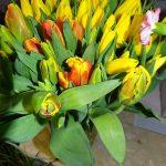 Tulipany_na_8 marca 2017_Kwiaciarnia Floristica Krakow__AC