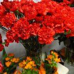 gozdziki polskie_Dzien Kobiet 2017_kwiaciarnia Floristica_Krakow_AC