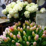 Roze z importu i tulipany z kraju_Kwiaciarnia Floristica Krakow_8 marca__AC