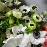 Anemone coronaria_Kwiaciarnia Floristica Krakow_8 marca__AC