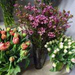 Kwiaciarnia Floristica Krakow_8 marca_Chamelaucium i tulipany_AC